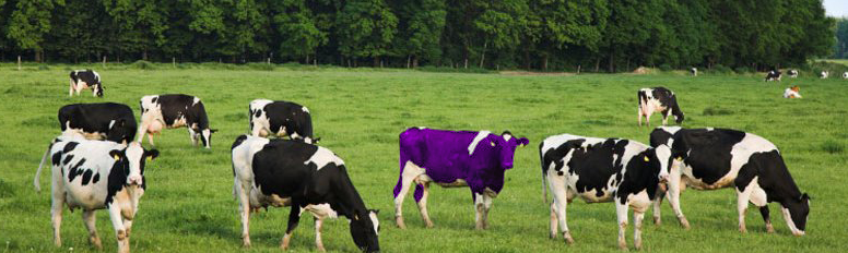 a cow standing out from the crowd