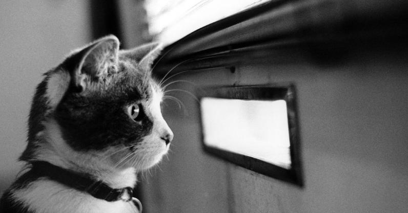 black and white cat staring out to the distance